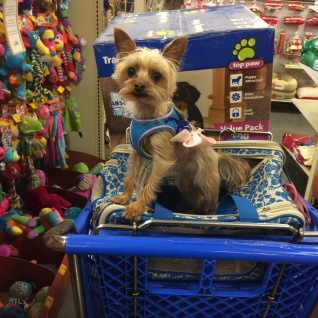 Clearly someone knows how to navigate PetSmart